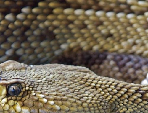 Venomous Bites and Stings – Austere Medicine Course