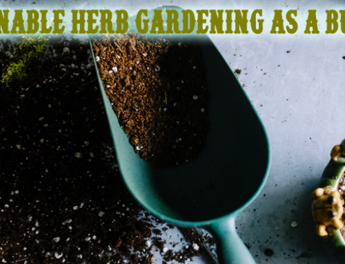 Sustainable Herb Gardening as a Business – 2021
